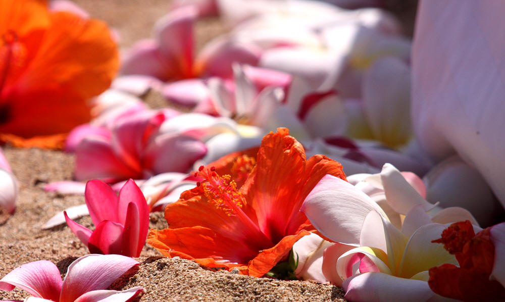 close up of the flowers on the sand at a wedding in Hawaii