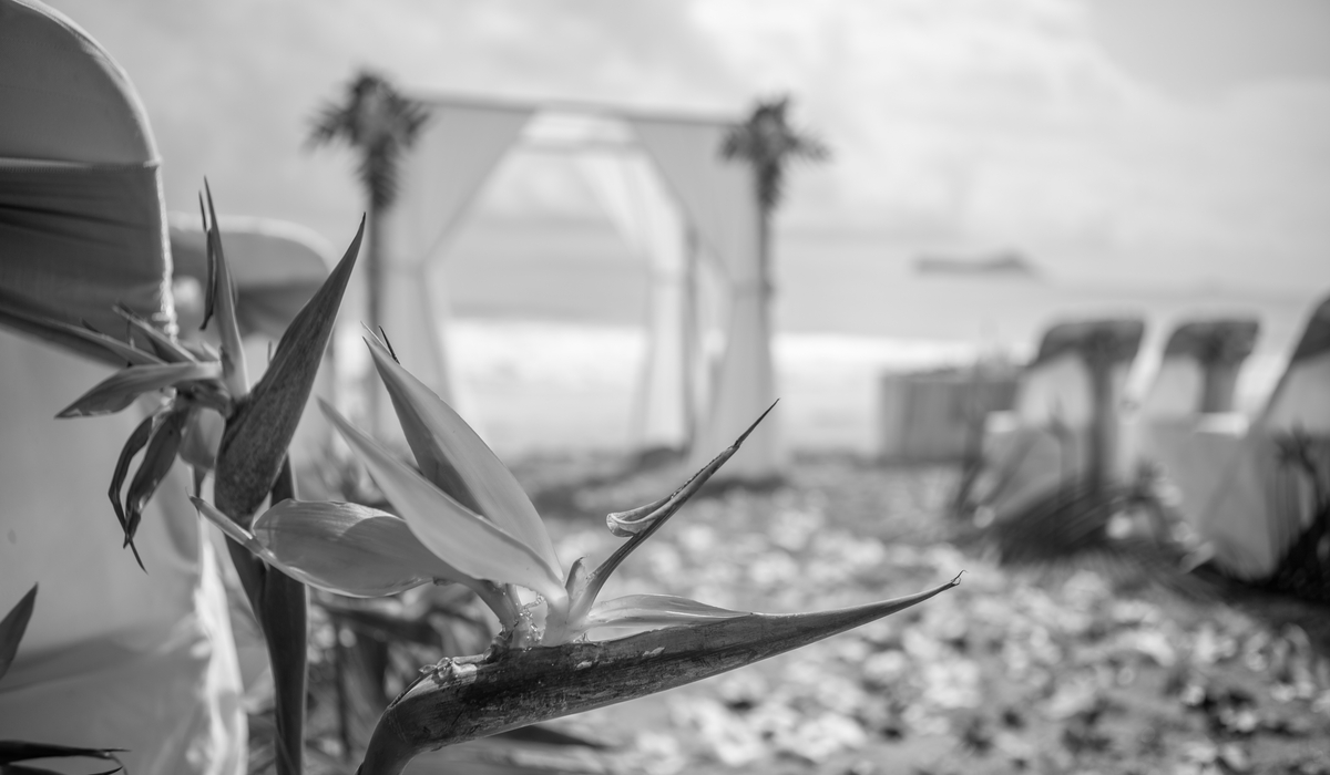 black and white beach wedding in Hawaii with chairs and flowers on the aisle way