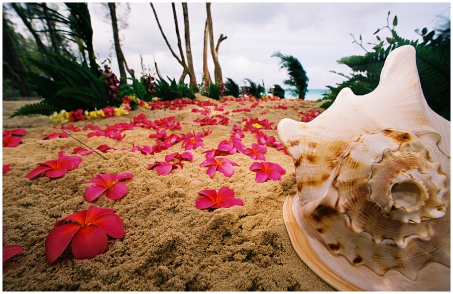 dark pink plumeria flower place in the sand on the aisle way for the bride