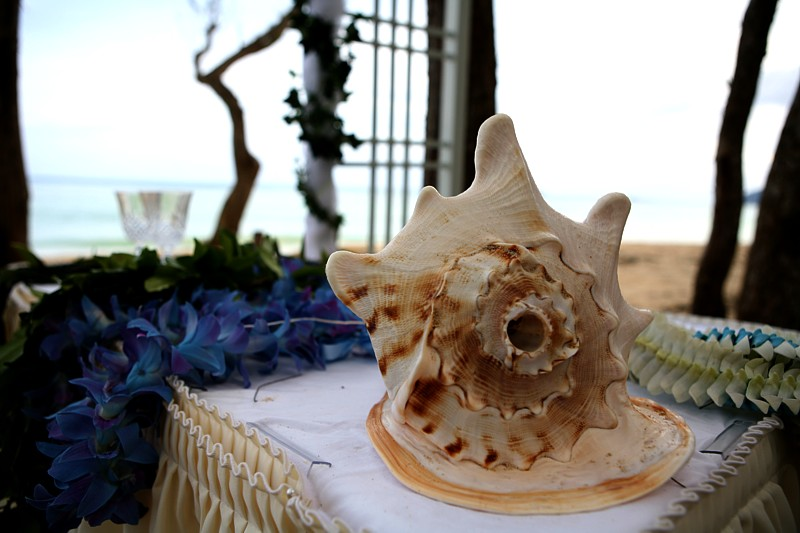 conch shell with blue purple leis under the white trellis archway on the beach in Hawaii