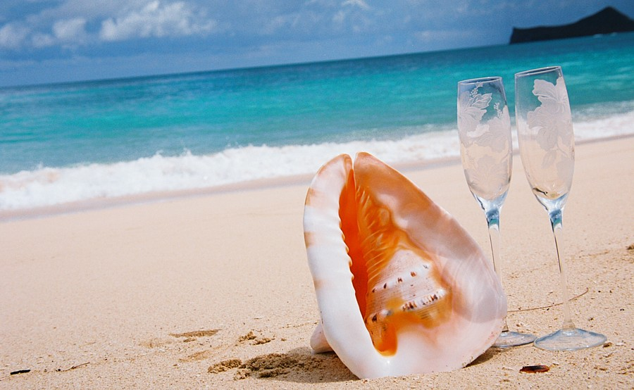conch shell on the sand with champagne glasses