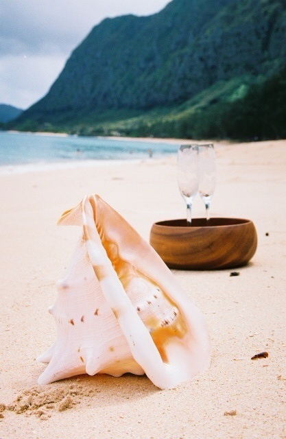wooden bowl with conch shell on the sand