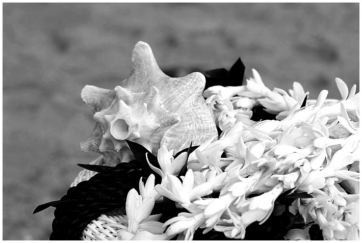 photo of a black and white conch shell with tea leaf leis
