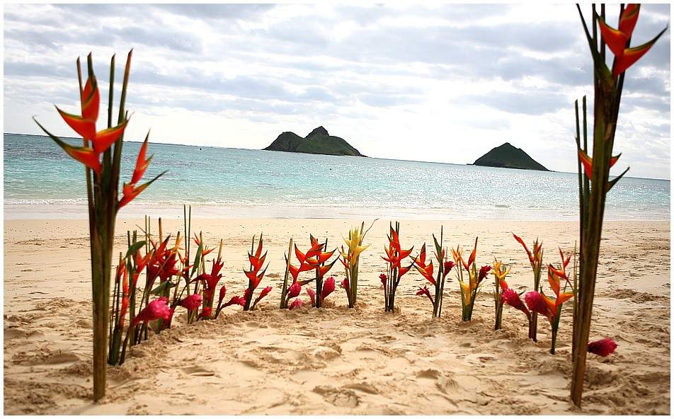 flower circle with Hawaiian heliconia flowers