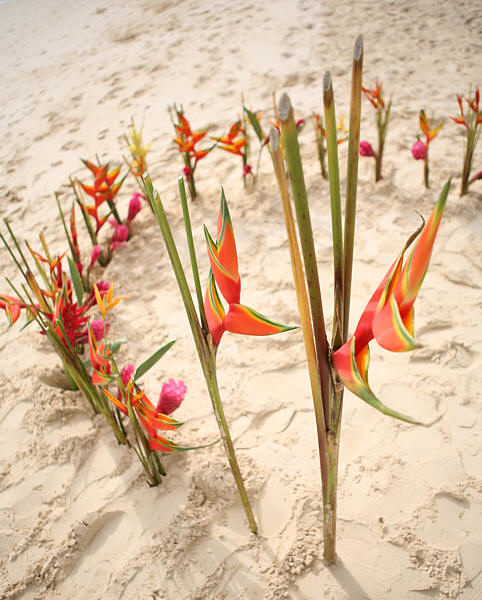 more flower circle for beach decoration on the sand