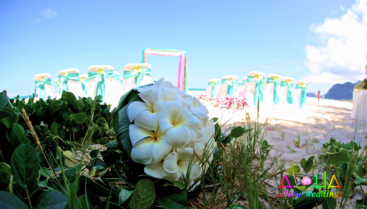 all white plumeria bouquet on the grass by the beach