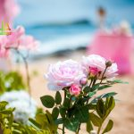pink roses on the beach of Hawaii for the aisle way decorations