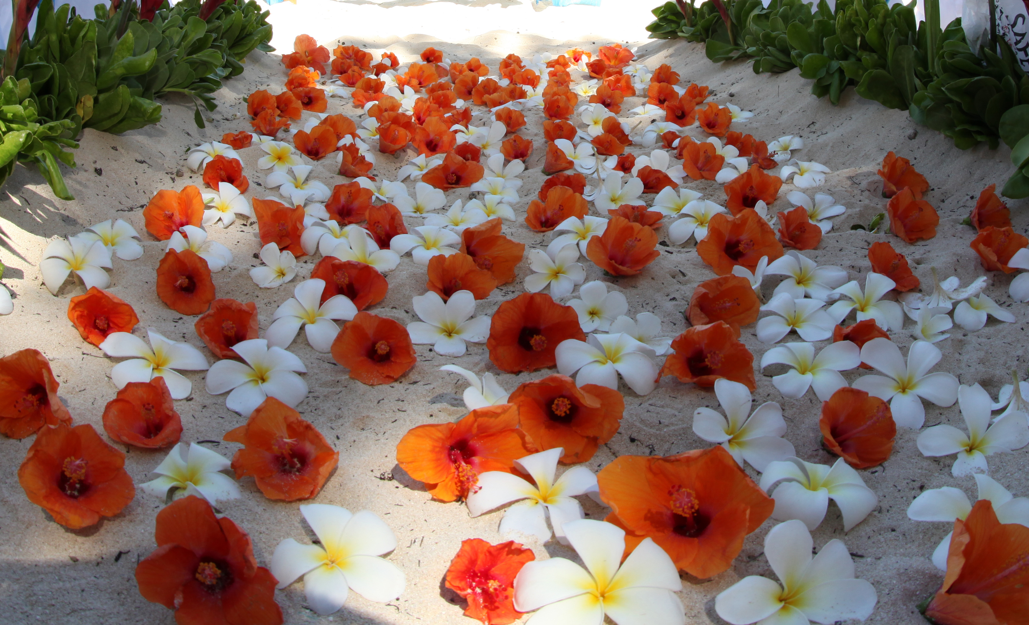 Hibiscus As A Wedding Flower The Many Variety Of Uses Hawaii