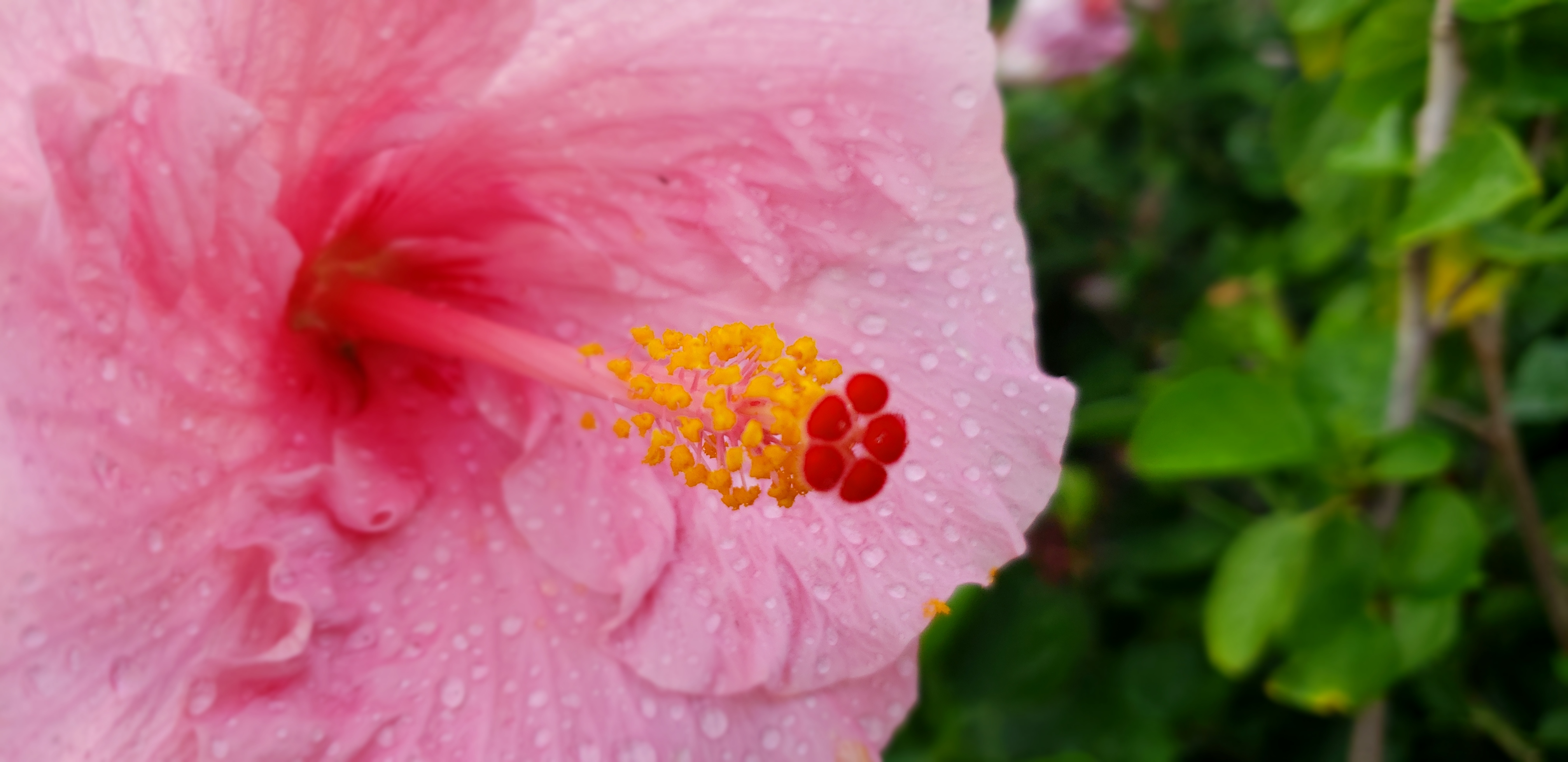 Hibiscus As A Wedding Flower The Many Variety Of Uses Wedding In